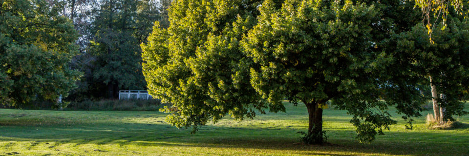 We've been providing tree services since 1995!
